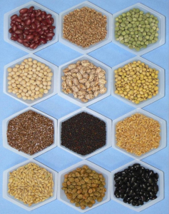 Various Seed Samples